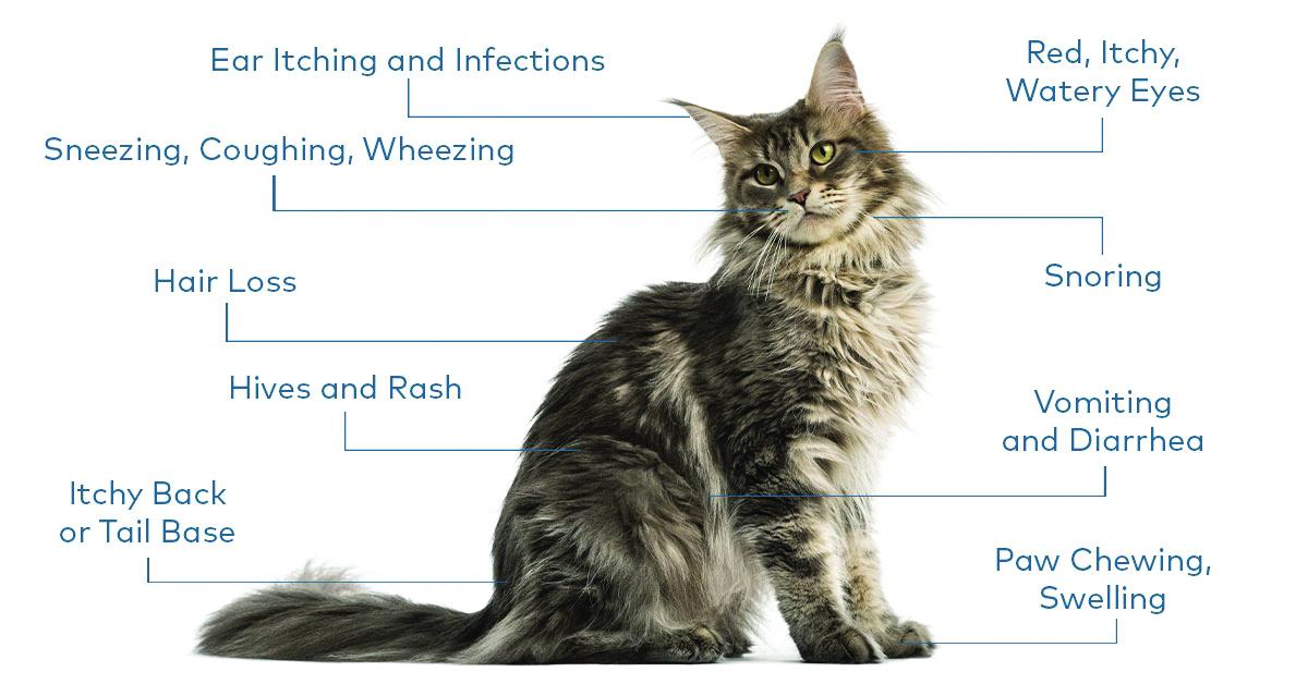 Cat Allergies 101