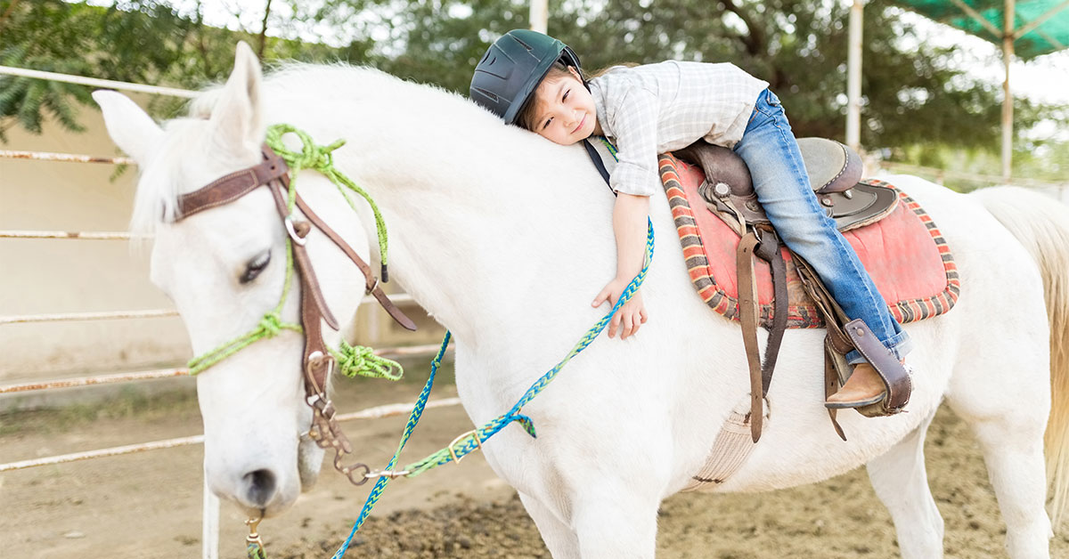 Equine Insect Bite Hypersensitivity (IBH)