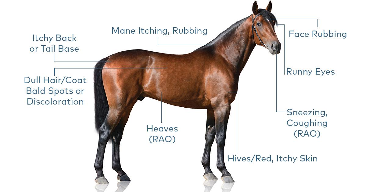 Horse Allergies 101
